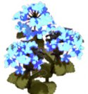 Flower Kit Hydrangea Blue