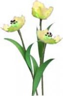 Flower Kit Tulip Yellow