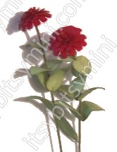 Flower Kit Zinnia Red - Click Image to Close
