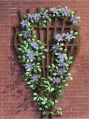 Flower Kit Clematis Purple