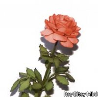 Flower Kit Rose Orange