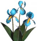 Flower Kit Iris Blue