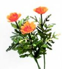Flower Kit Marigold Orange