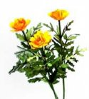 Flower Kit Marigold Gold
