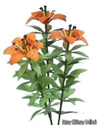 Flower Kit Lily Orange