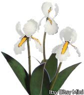 Flower Kit Iris White