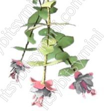 Flower Kit Fuchsia Pink and White - Click Image to Close