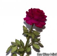 Flower Kit Rose Red