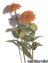 Flower Kit Zinnia Orange
