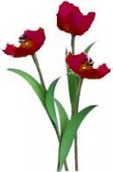 Flower Kit Tulip Red