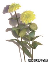 Flower Kit Zinnia Yellow