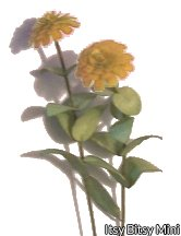 Flower Kit Zinnia Gold