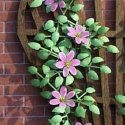 Flower Kit Clematis Pink